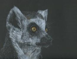 Lemur 16